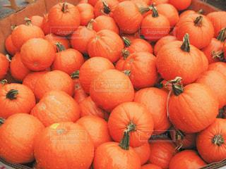 秋,屋外,海外,水,水滴,鮮やか,オレンジ,野菜,パンプキン,たくさん,マーケット,雨上がり,新鮮,ファーマーズ,フレッシュ,ファーマーズマーケット,ベジタブル,南瓜,カボチャ,pumpkin,dewdrop