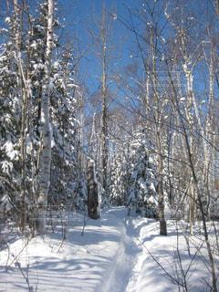 雪道と雪に覆われた木の写真・画像素材[2213876]