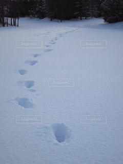 雪に残る足あとの写真・画像素材[2215235]