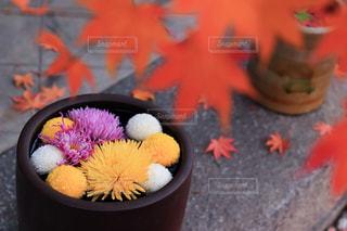 植木鉢のクローズアップの写真・画像素材[2511135]