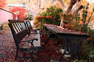 ベンチはピクニックテーブルの上に座っているの写真・画像素材[2511154]