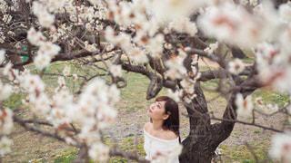 木の隣に立っている人の写真・画像素材[3046494]