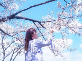 風景,空,花,桜,樹木,さくら,ブロッサム