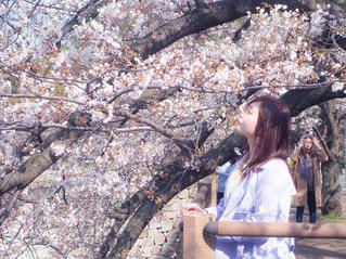 風景,花,春,桜,屋外,お花見,人,桜の木