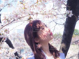 女性,花,春,桜,屋外,樹木,お花見,人