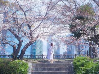 空,花,春,桜,屋外,樹木,さくら