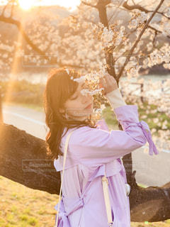 夕日と桜の写真・画像素材[3111435]