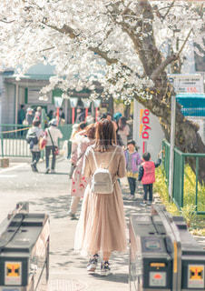 桜の下での写真・画像素材[3111447]
