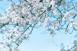 木のクローズアップの写真・画像素材[4314338]