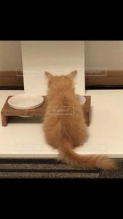 猫,後ろ姿,キティ