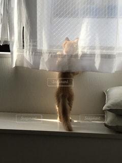 猫,動物,後ろ姿,キティ