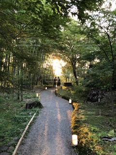 夏,屋外,京都,緑,散歩,景色,樹木,竹,眩しい,竹林,レジャー,お散歩,ライフスタイル,おでかけ