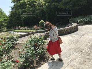 女性,後ろ姿,薔薇,人物,背中,人,後姿,5月,野外,赤色,夢中,赤いスカート,花の写真を撮る姿,女性と薔薇