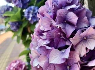 花の写真・画像素材[3408194]