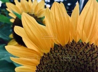 花のクローズアップの写真・画像素材[4023550]