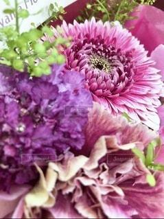 紫色の花のクローズアップの写真・画像素材[4207622]