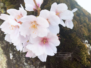 花の写真・画像素材[4272600]