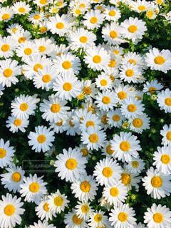 春のひかりいっぱいの写真・画像素材[2051866]