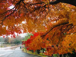 見惚れる紅葉の写真・画像素材[2567936]