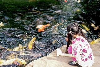 うしろ姿の少女と鯉の写真・画像素材[2141297]
