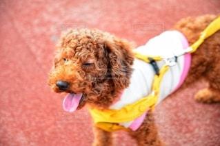 愛犬の写真・画像素材[2700274]
