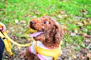 愛犬の写真・画像素材[2700290]