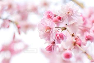 花の写真・画像素材[2063259]