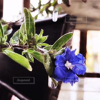 花,水,水滴,ベランダ,水玉,しずく,フォトジェニック