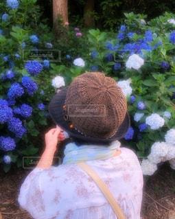 家族,花,後ろ姿,フラワー,紫陽花,人物,背中,人,後姿,フォトジェニック