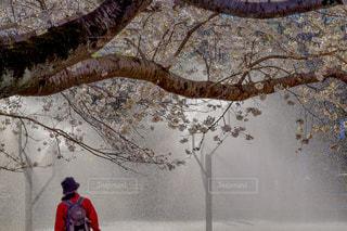 自然,風景,桜,屋外,後ろ姿,人物,人,噴水,輝く,光り