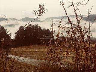 雲,水滴,景色,草,雲海,和歌山,草木