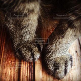 猫 - No.208151