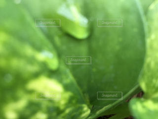 植物,水,水滴,葉,雫,flower,しずく