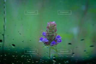 花,雨,草花,梅雨