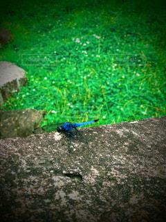 休憩中の蜻蛉さんの写真・画像素材[2280076]