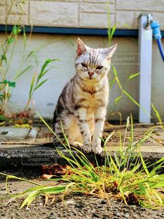 土の上に座っている猫の写真・画像素材[2280145]