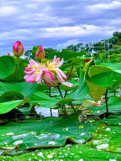 カラフルな花の群しの写真・画像素材[2281504]