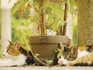 猫,自然,動物,レトロ,ナチュラル,フィルム,日中,フィルム写真,フィルムフォト