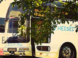 自然,バス,フィルム,フィルム写真,フィルムフォト