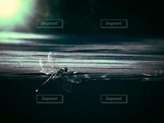 暗い,レトロ,昆虫,生き物,フィルム,蜻蛉,フィルム写真,フィルムフォト