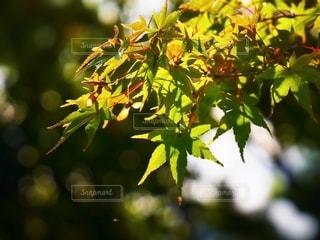 自然の写真・画像素材[2622742]