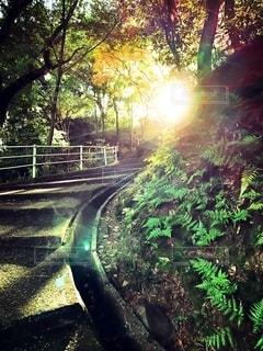 森の中の階段の写真・画像素材[2739135]