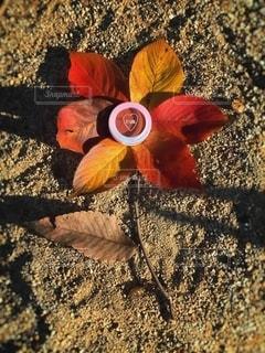 自然,花,屋外,手,葉,季節,影,光,可愛い,フレーム,メイク,美容,ブラウン,カラー,色,コスメ,化粧品,100円,プチプラ,置き画,ダイソー,アイシャドウ,メイク道具,DAISO