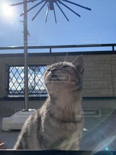 猫,空,動物,太陽,雲,晴れ,ベランダ,光,ふわふわ,座る,快晴,眠い,天気,日向ぼっこ,ぽかぽか