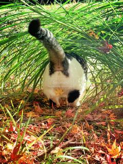 猫,自然,動物,屋外,白,後ろ姿,黒,鮮やか,草,ペット,人物,可愛い,お尻,尻尾,ネコ,猫の日,222