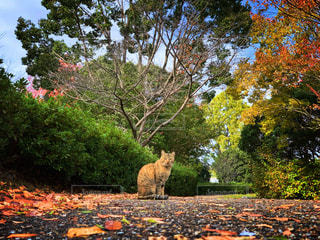 猫,自然,秋,動物,森林,屋外,樹木,ペット,人物,可愛い,広い,草木,ネコ