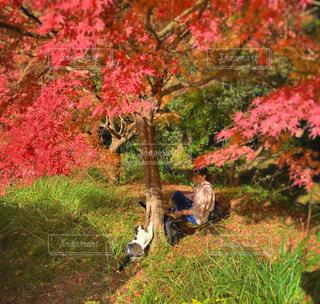 女性,2人,猫,自然,公園,秋,動物,森林,木,屋外,草原,景色,草,樹木,ペット,人物,人,可愛い,草木,告白,ネコ,カエデ,猫の日,222,かくれんほ