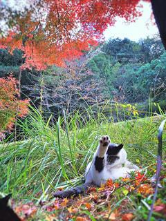 猫,自然,花,動物,屋外,景色,草,樹木,ペット,人物,肉球,ヨガ,毛繕い,体操,草木,ネコ,2月,猫の日,222,2月22日