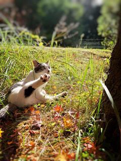 猫,自然,動物,屋外,白,景色,草,ペット,人物,可愛い,草木,ネコ,毛玉,猫の日,222,2月22日