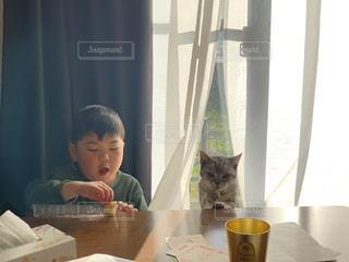 子ども,家族,友だち,1人,2人,猫,動物,ねこ,ペット,人物,可愛い,幼児,少年,男の子,ネコ,猫の日,222
